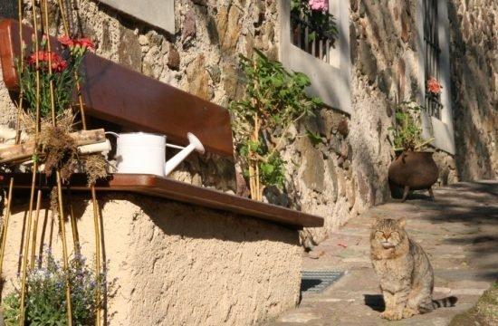 Impressioni dal Fronthof / Alto Adige